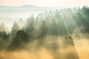 schönheit Nebel